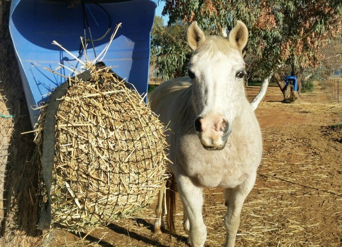 Small GutzBusta® Slow Feed Hay Net