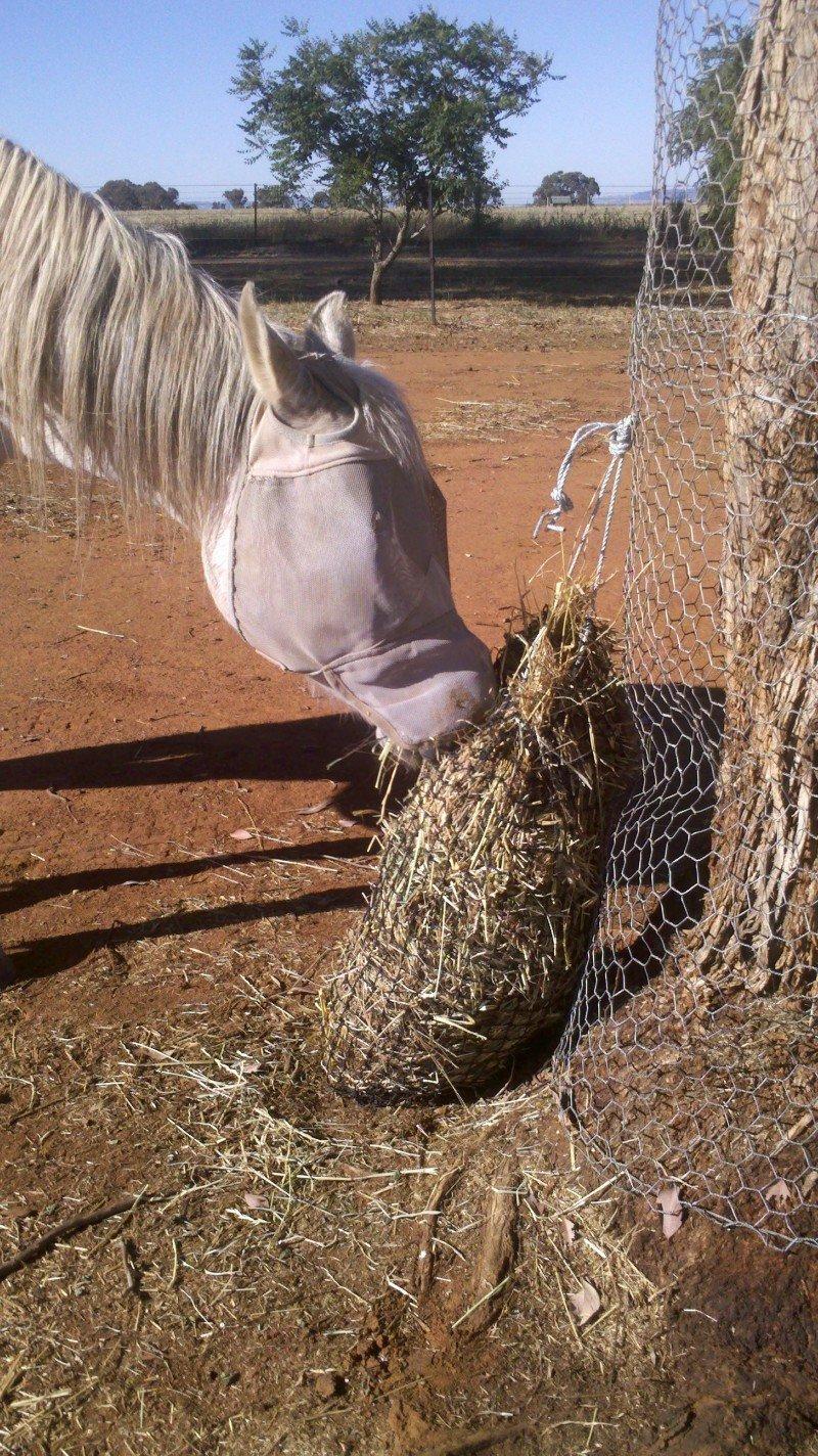 3cm GutzBusta Slow Feed Hay Net