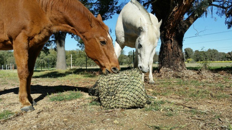 4cm GutzBusta Medium Hay Net 60 ply