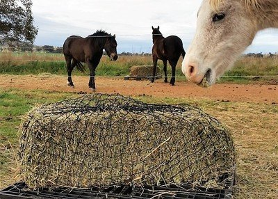 Large GutzBusta® Slow Feed Hay Nets