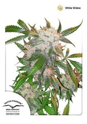 ​White Widow®
