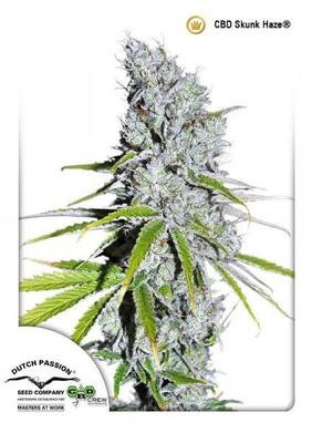 CBD Skunk Haze®
