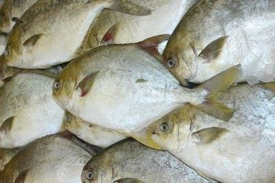 【Welfresh Seafood】FRESH GOLDEN POMFRET FISH 新鲜金鲳鱼, ~2 lb(每天上午9点截单)