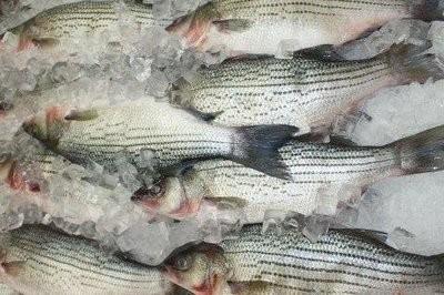 【Welfresh Seafood】FRESH STRIPED BASS 新鲜鲈鱼, ~3 lb/ea(每天上午9点截单)