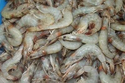 【Welfresh Seafood】HEAD ON SHRIMP 30/40   南美有头虾30/40, ~5 lb(每天上午9点截单)