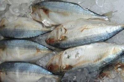 【Welfresh Seafood】INDIAN MACKEREL 印度马加(鲭)鱼, ~1 lb(每天上午9点截单)