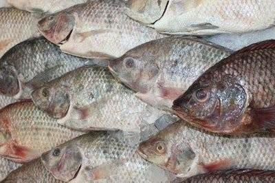 【Welfresh Seafood】TILAPIA 吴郭鱼, ~2 lbs/ea(每天上午9点截单)