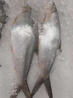 【Welfresh Seafood】MILK FISH 虱目鱼 ~2lb(每天上午9点截单)