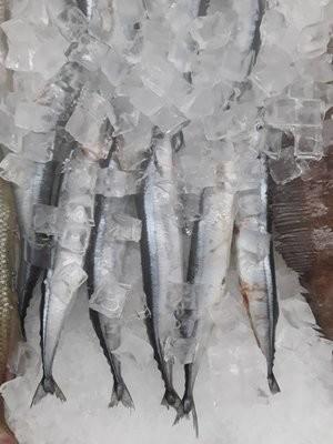 【Welfresh Seafood】MACKEREL PIKE 秋刀鱼 ~2lb(每天上午9点截单)