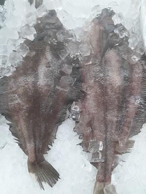 【Welfresh Seafood】REX SOLE FISH 新鲜龙利鱼 ~3lb 1号处理去鳃去鳞清内脏(每天上午9点截单)