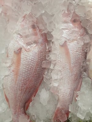 【Welfresh Seafood】RED SNAPPER 红鲷鱼 ~2.5lb(每天上午9点截单)