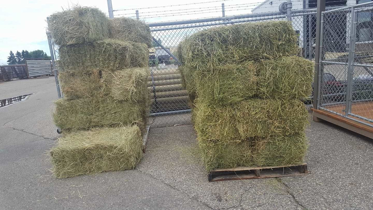 Small Square Grass Hay Bale GRASSHAY