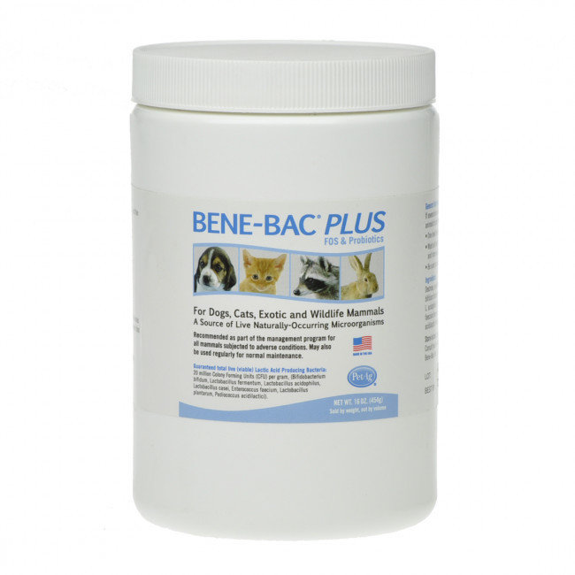 Bene Bac Plus (Бене Бак) порошок 0196 B2.1
