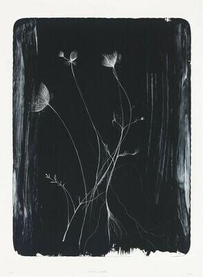 Hemlock (Plant) - Lithograph
