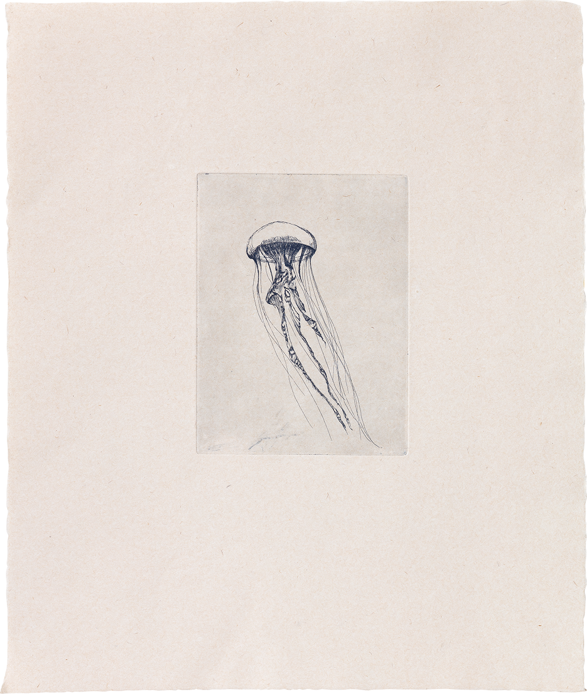 Totem Jellyfish (I) - Etching