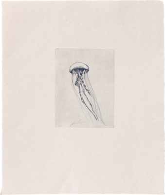 Jellyfish - Etching