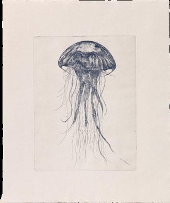Blue Medusa - Etching