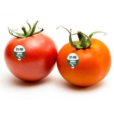 Tomato - FDA Food Safe PLU Sticker - 5000 Stickers