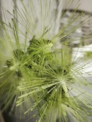 Kunsttak groen sprieten