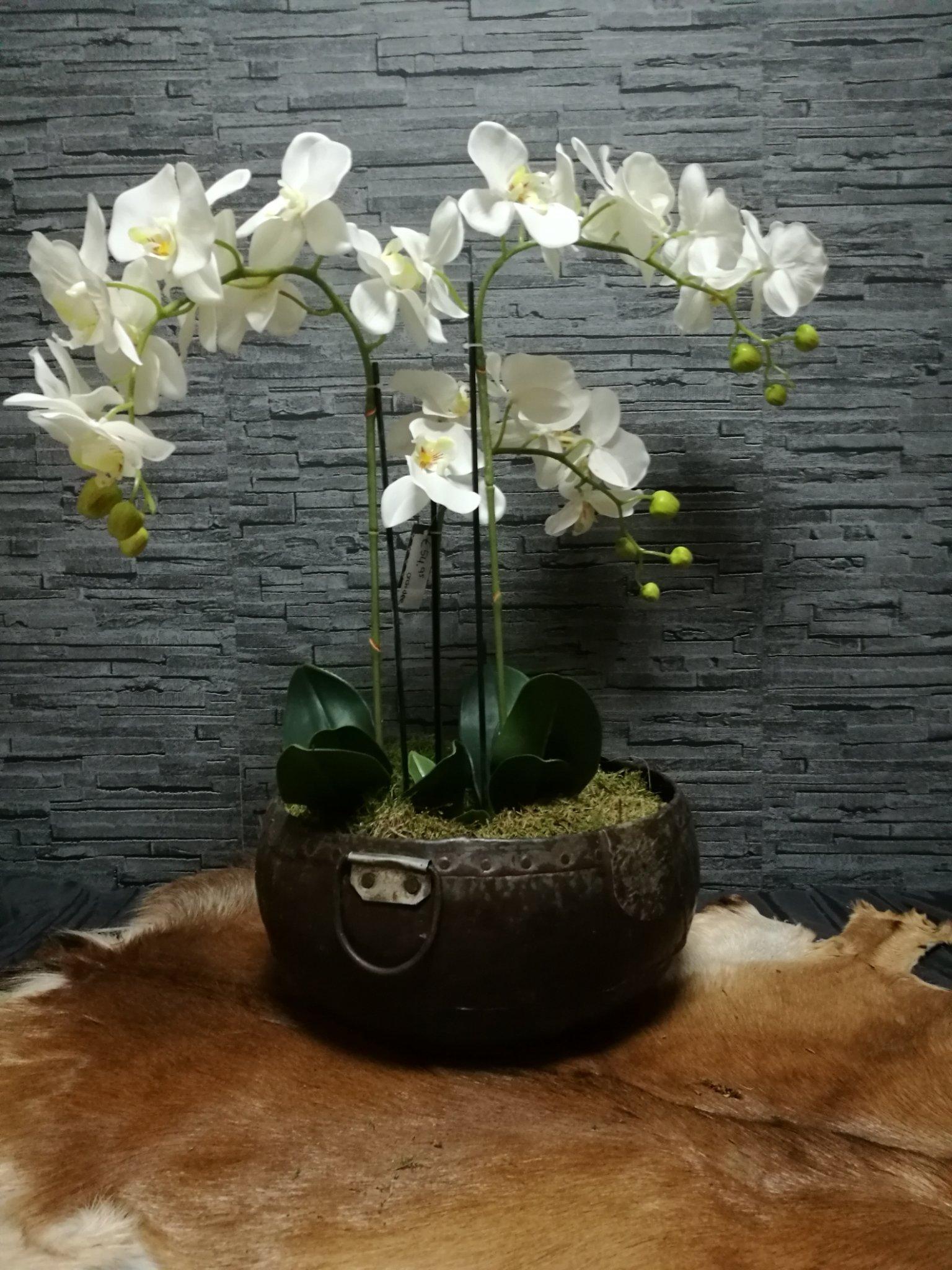 Orchidee (kunst) 01015