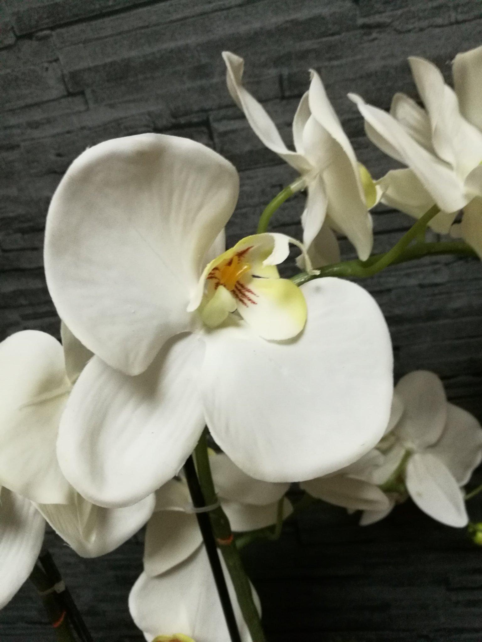 Orchidee (kunst)