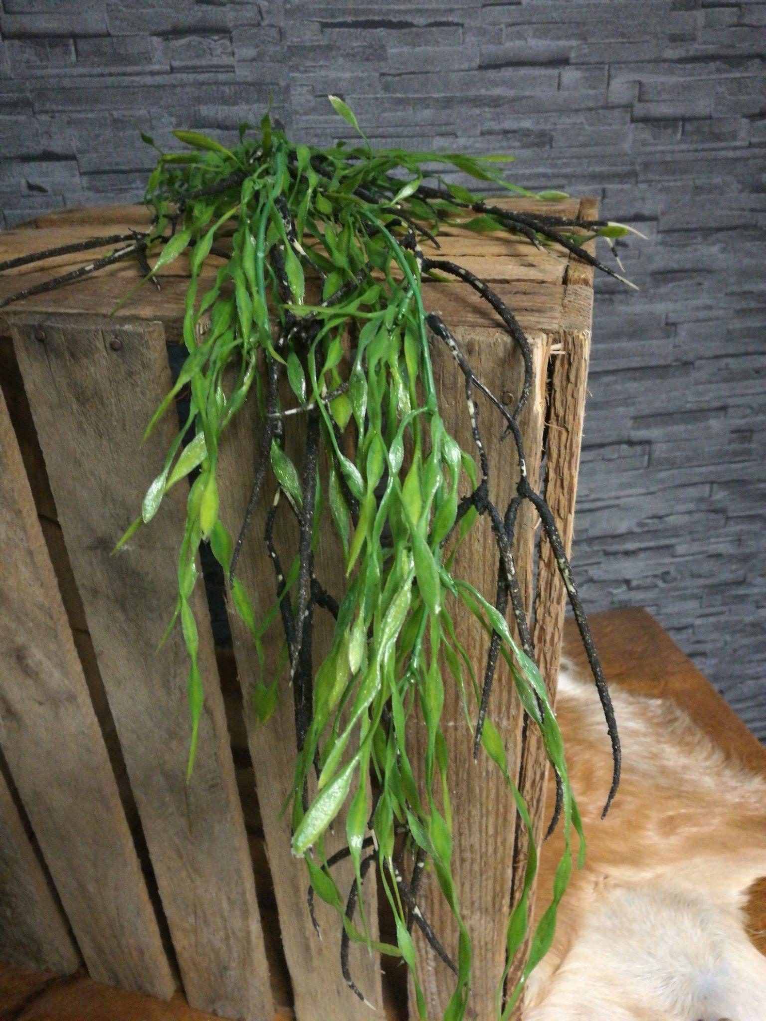 Asparagus spray kunst 01192