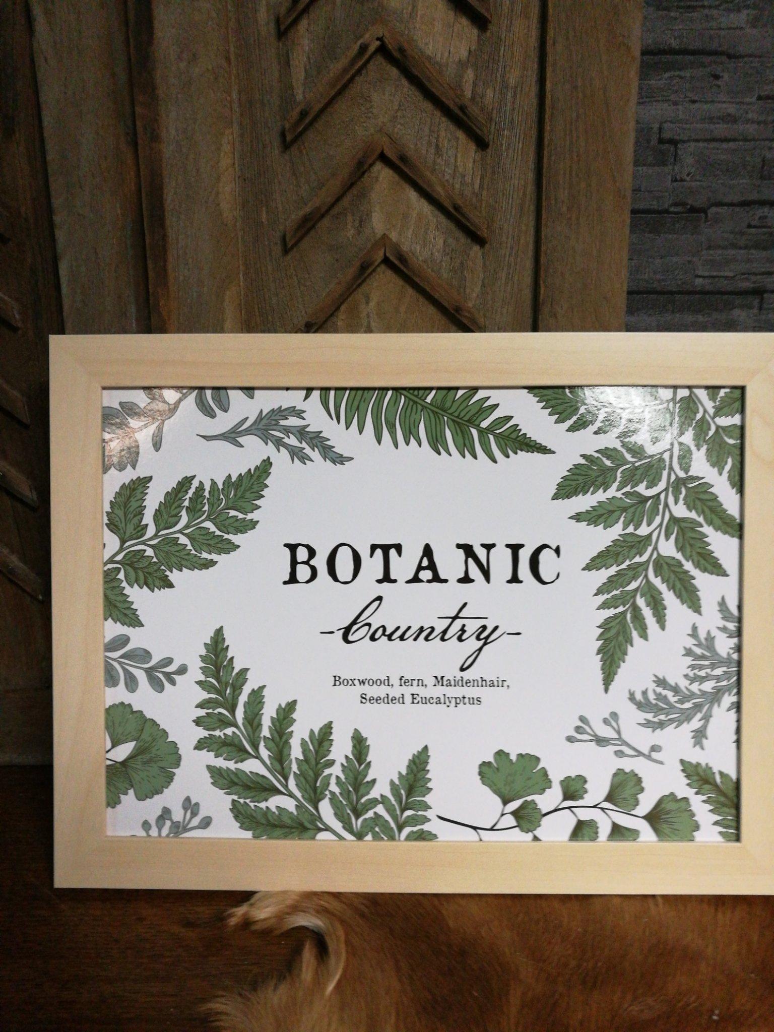 Knietafel botanisch 01485