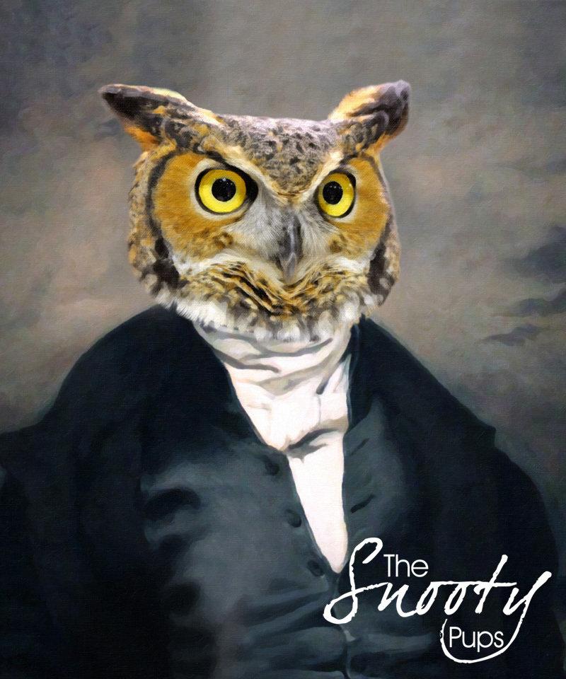 Owl Portrait 00119