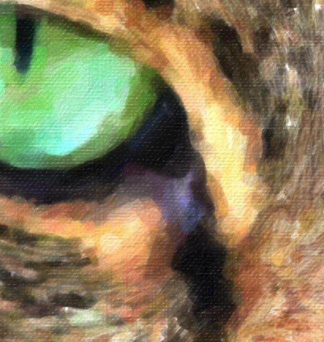 Cat Portrait Texture