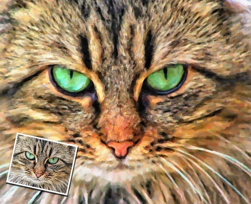 Custom Cat Portrait Oil Painting