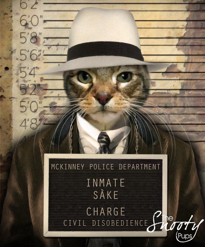 Custom Cat Portrait - Gangster Mobster
