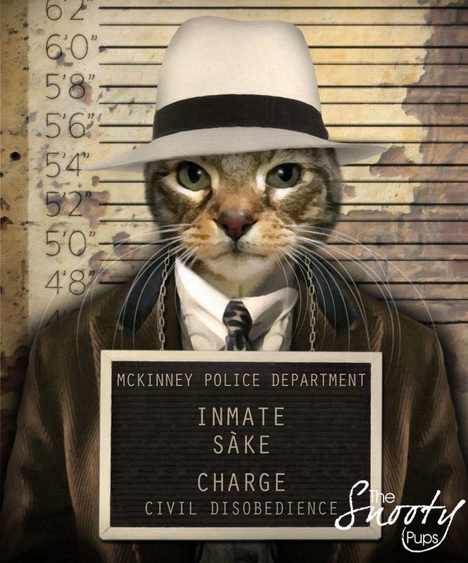 Custom Cat Portrait - Gangster Mobster