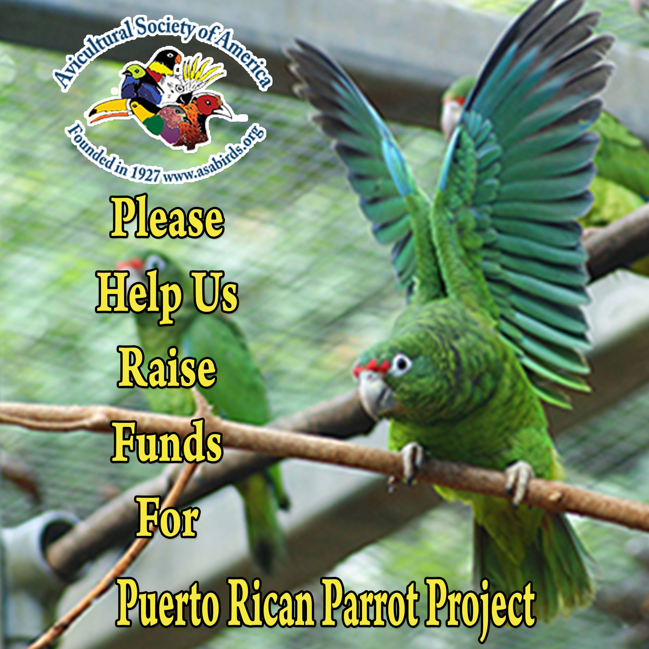 Donate To Puerto Rican Parrot Project 100