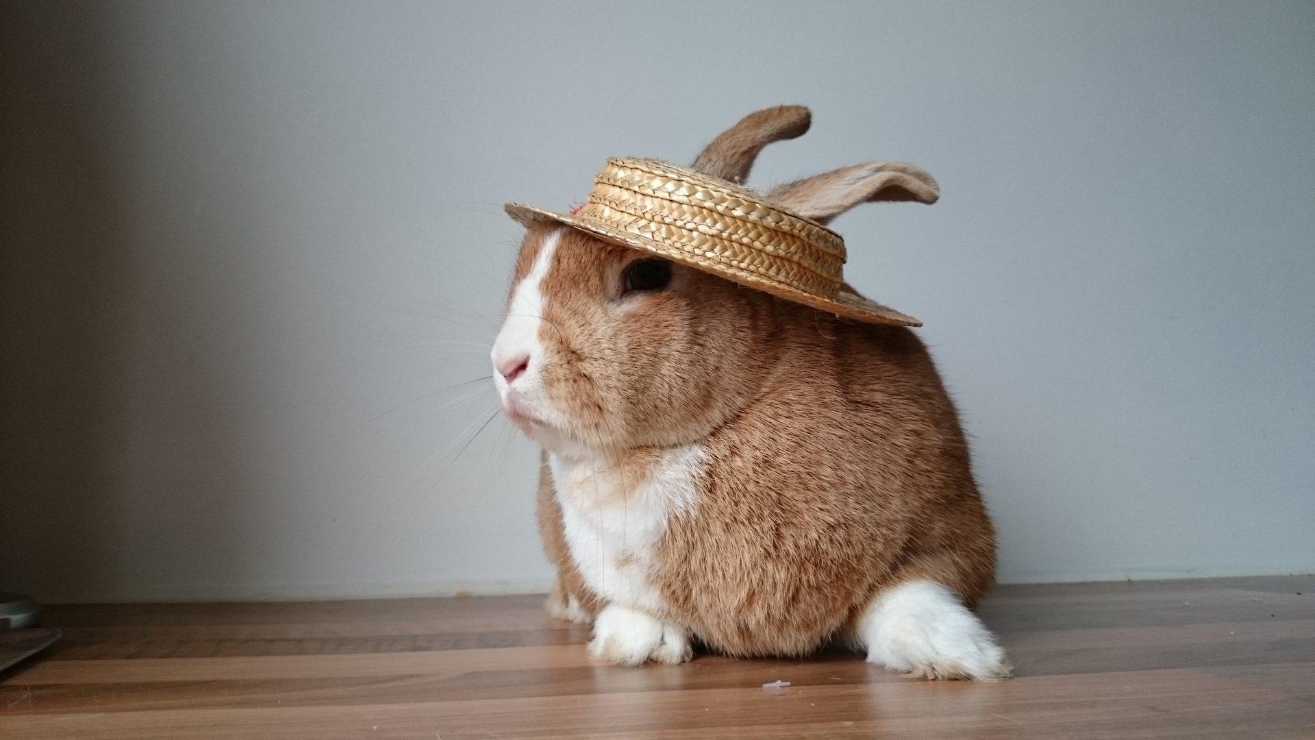 """I'll Eat My Hat"" Straw Rabbit Hat 830792008478"