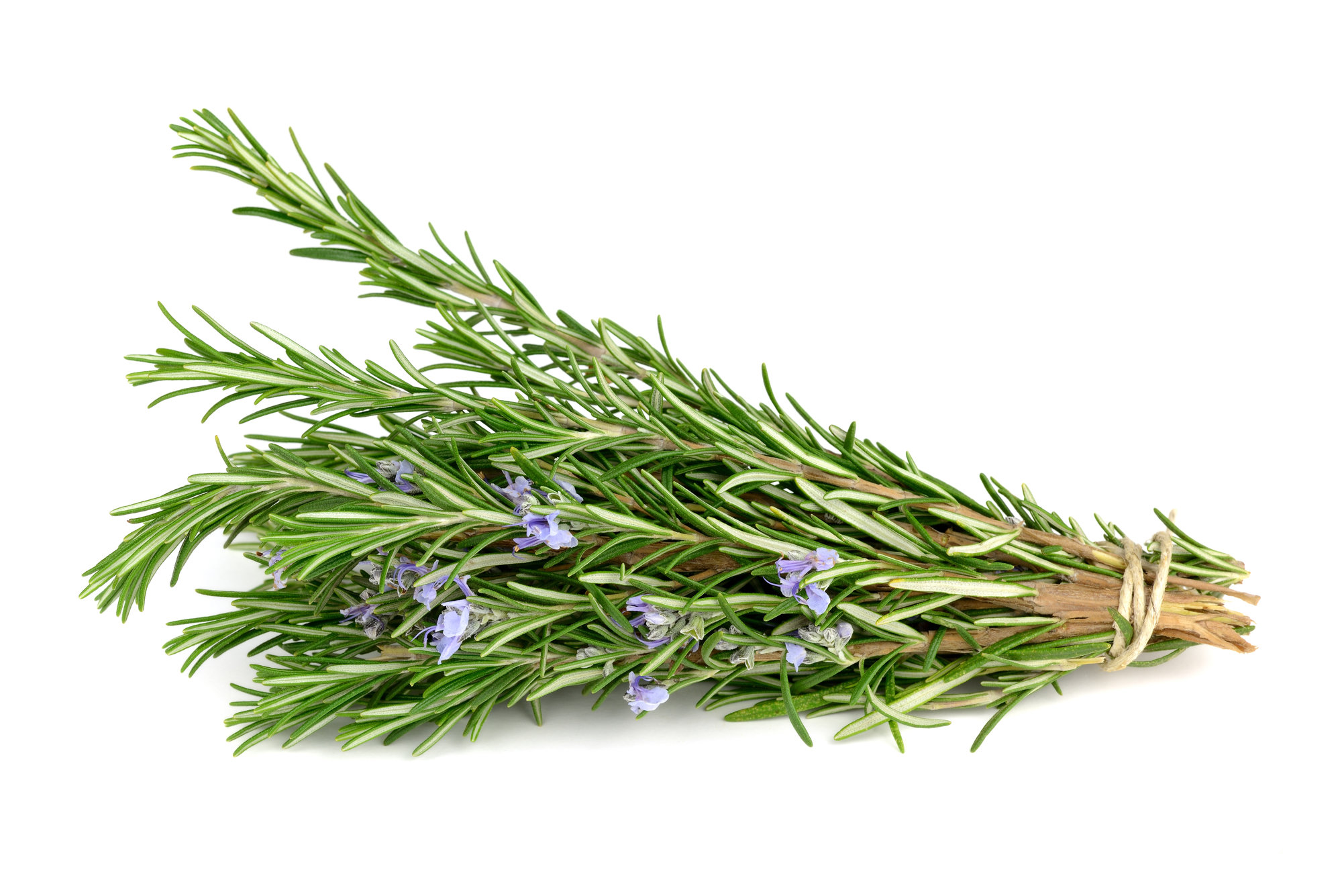 Rosemary (Rosmarinus officinalis) Essential Oil  - 15ml EO-ROSMAR15