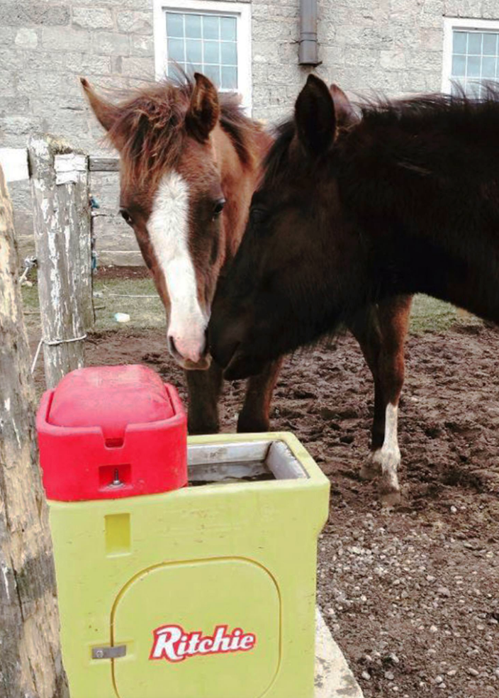 Ritchie Omni 1 #18359 | Heated Automatic Waterer