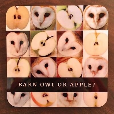 Coaster / Owl Apple
