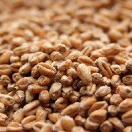 Weyermann® Pale Wheat