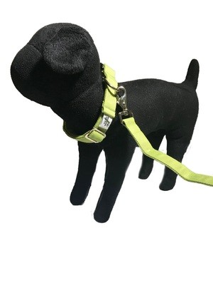 R Natural Bamboo Double Layer Buckle Collar/  Leash Set