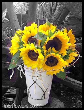 Sunflowers JF66