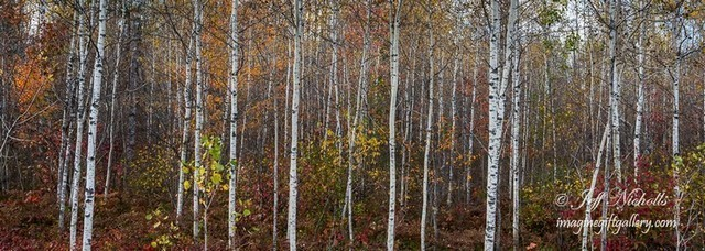 Birches,  ON, Canada