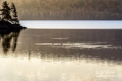 Photo on Canvas, Algonquin Provincial Park