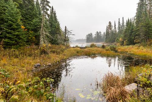 Serene Evergreen, Algonquin Park, Ontario, Canada