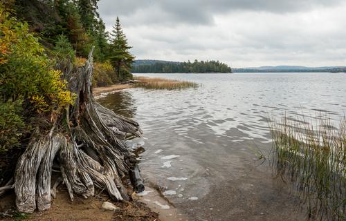 Shoreline Cedar, Algonquin Park, Ontario, Canada