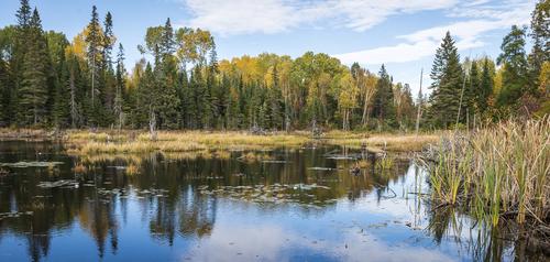Lily Pond, Algonquin Park, Ontario, Canada