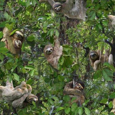 Green Packed Sloth by Elizabeth Studio