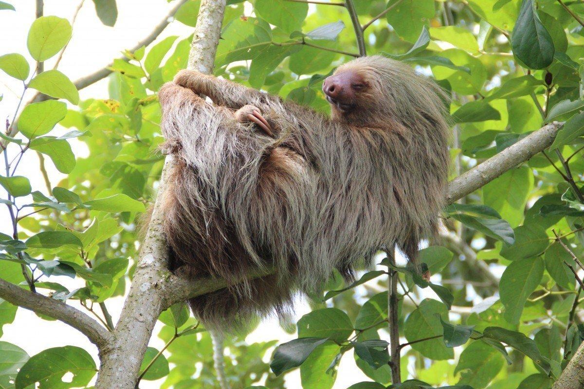Sloth Club - September to December 2018