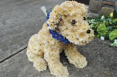 3D Dog on a mossed frame