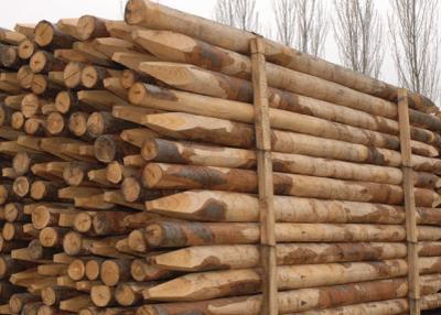 Palo in legno di castagno per recinti Lumache (20 pz) PL125