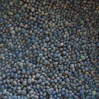 Sementi di Trifoglio selezionati 5 kg